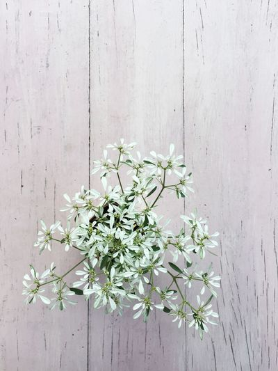Directly above shot of potted flowering plant on wooden table