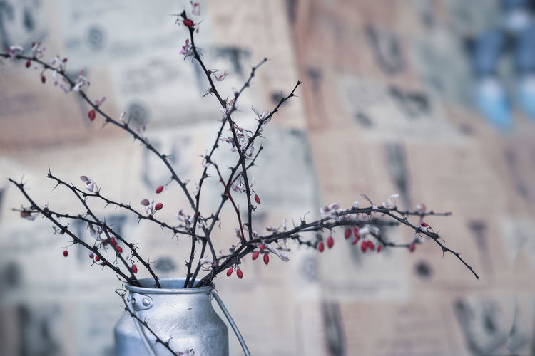 Dry thorny branches with berries in a metal jug, still life, in the style of ikebana on a blurred background in blue tones. Selective focus No People Day Branch Plant Tree Nature Close-up Flower Beauty In Nature Cherry Blossom Fruit Bare Tree Fragility Growth Japanese  Jar Bouket Still Life Twig Dry Prickly Art Wall Vintage Background