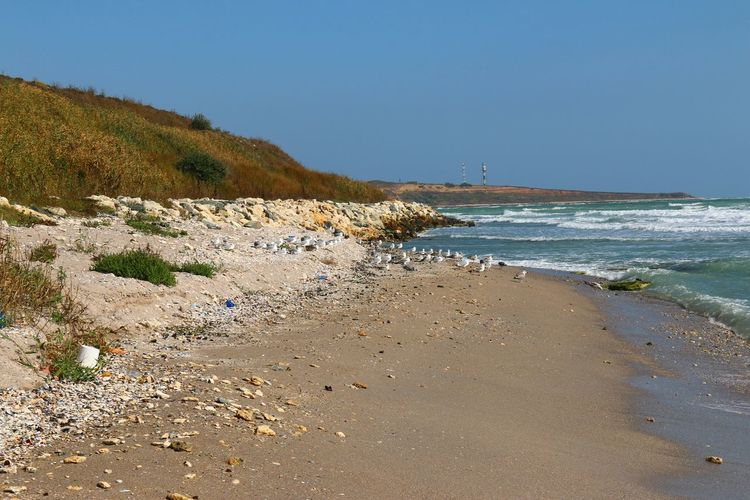 Black Sea Life