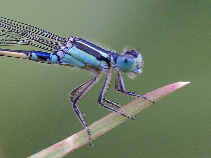 Dragonfly Macro Photography Dragonflies Insects  Macro Nature