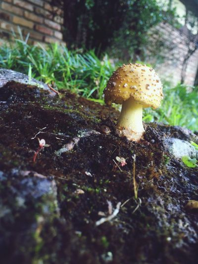 Fairy Mushroom Mushroom Fairy Small World