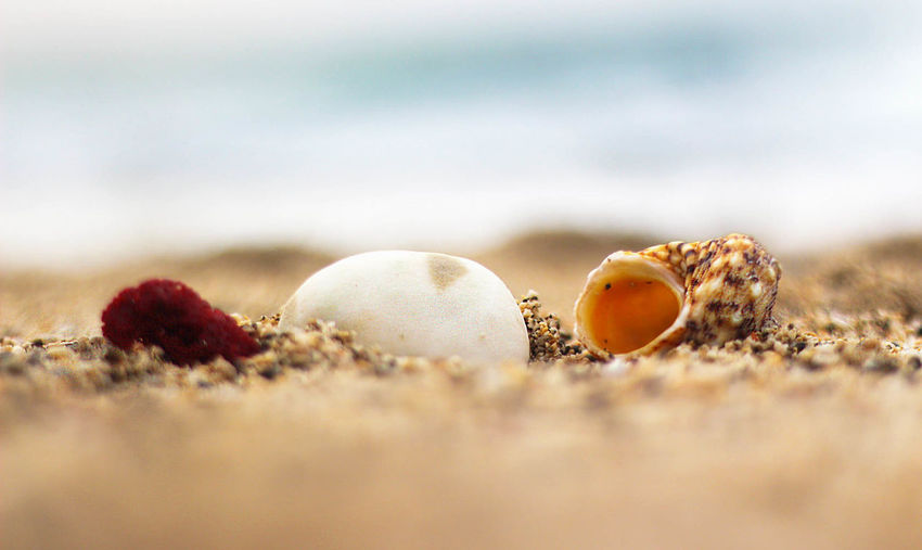 Beach Beauty In Nature Day Focus On Foreground Fresh On Eyeem  Fresh on Market April 2016 Nature No People Sand Shells Still Life Summer Summertime White Stone