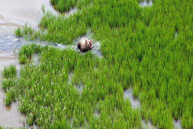 Dog amidst grass in water