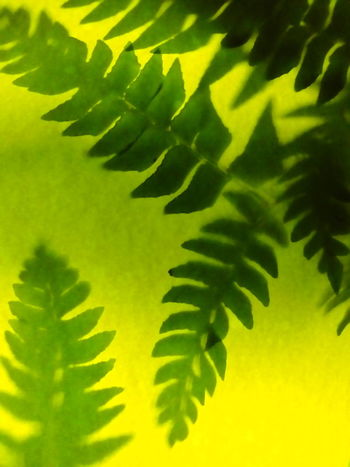 Green Color Leaf Close-up Nature Plant Fern Day Growth Plant Part Freshness Agriculture No People Frond Outdoors Palm Tree Beauty In Nature | Shadows & Lights Colour Paper Above The Plant The Bulb Under The original idea is from a friend. I tried it but in a different way. You can see the original idea from it. (KatkaKacic)