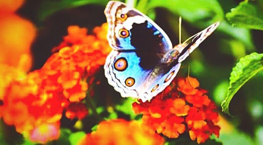 Spring Into Spring Spring Flowers Butterfly ❤ EyeEm Nature Lover EyeEm Best Shots The Week On EyeEm OpenEdit