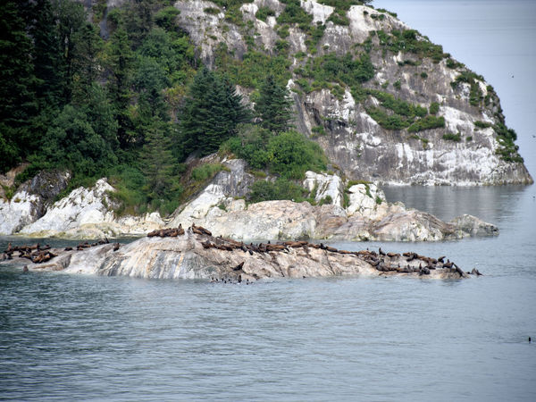 Seals, Sun and Sea Glacial Nature Outdoors Rock - Object Scenery Sea Sea Life Seals Seals On Rocks Water