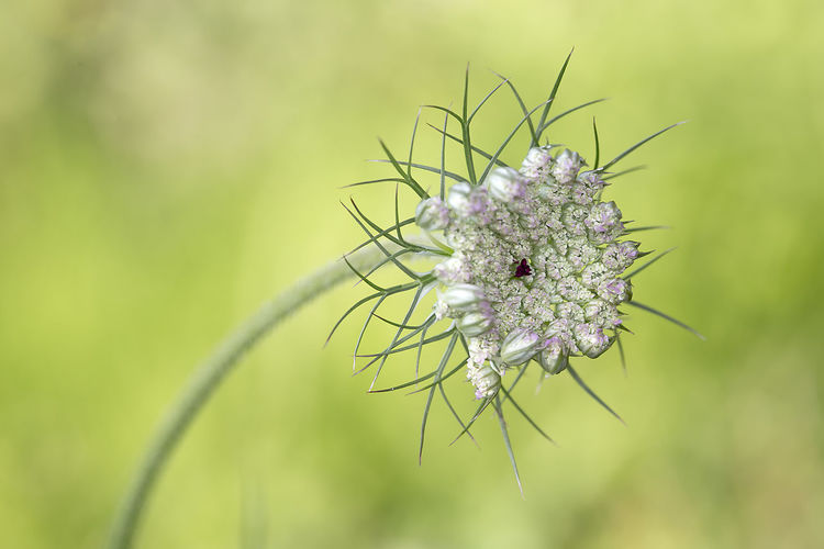 Flower Flower Head Perching Uncultivated Insect Wildflower Close-up Plant