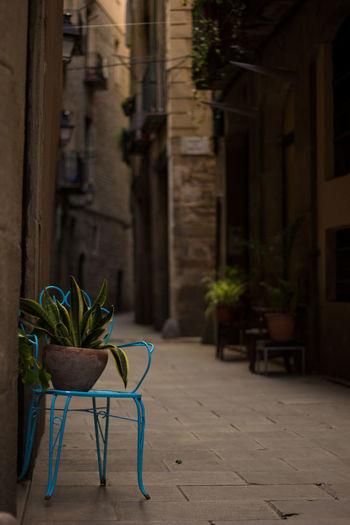 Barcelona Barrio Gótico Gothic Quarter Hidden Places Historic Narrow Urban