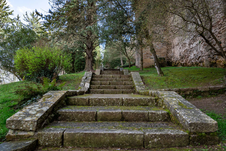 Low angle view of steps amidst trees in park