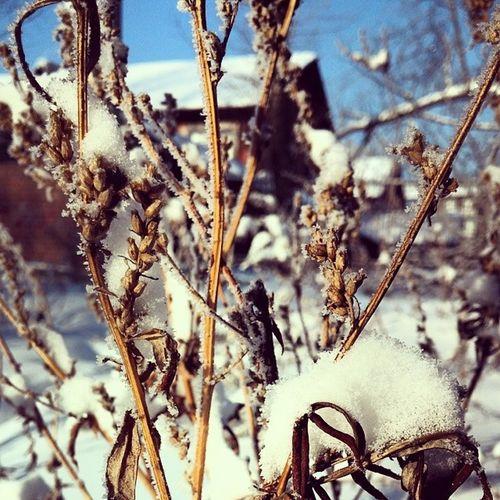 Frostigermorgen Sonnigermorgen Nachdemschneefall Sibirischelandschaft irgendeinepflanze