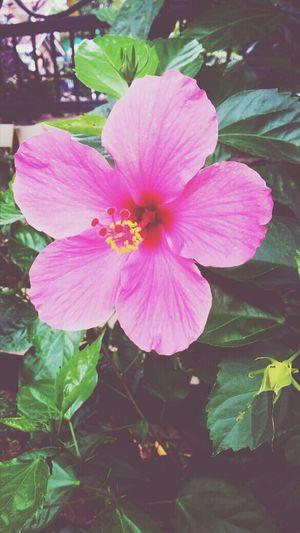 Much Love Pink Flower