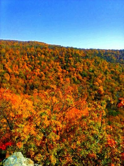 Enjoying The View Fall Beauty Beatiful Colorfull Trees Go Higher