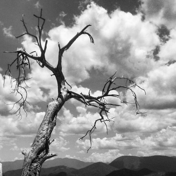 Landscape Tree Branch Beauty In Nature Monochrome Photography Damaged Abandoned Surrealism Ansel Adams Inspired Natural Light Portrait LoveNature OaxacaTravel Cloud - Sky Plant Poetry Inspirations Inspired By Beauty Travel Photography