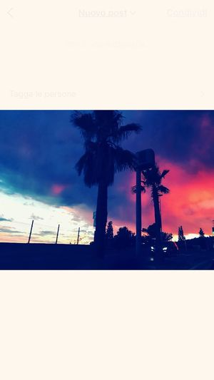 🌴 Love Silhouette Palm Tree Sunset Sky Cloud - Sky Scenics Beauty In Nature Nature Tree
