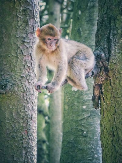 Monkey Monky Affe Animals Animal Photography Animal Animal_collection