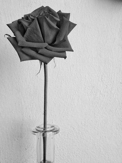 Black and white rose. No People Xperia ZL Mobilephotography Abstract Photography Abstract White And Black Decoration Nature Rosé Flower Rose - Flower Ornament One Rose