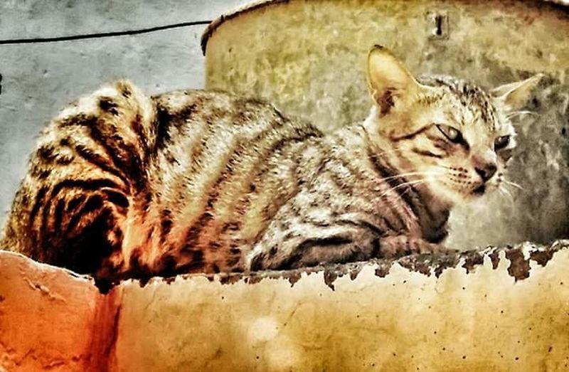 Cat Sharpeyes Ready To Eat Predatoreyes Moment Outdoors Animal Wildlife Love Animal