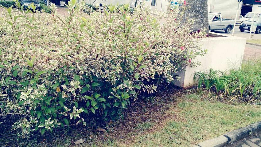 Way for? Plant Nature Flower