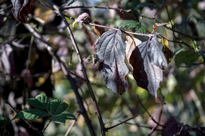 Beauty In Nature Branch Close-up Day Dry Flower Focus On Foreground Fragility Growth Hanging Leaf Leaves Nature No People Outdoors Plant Plant Part Plant Stem Tranquility Tree Vulnerability  Wilted Plant