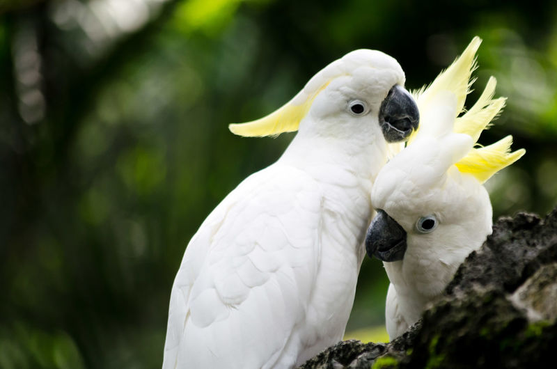 Close-up of cockatoos perching outdoors