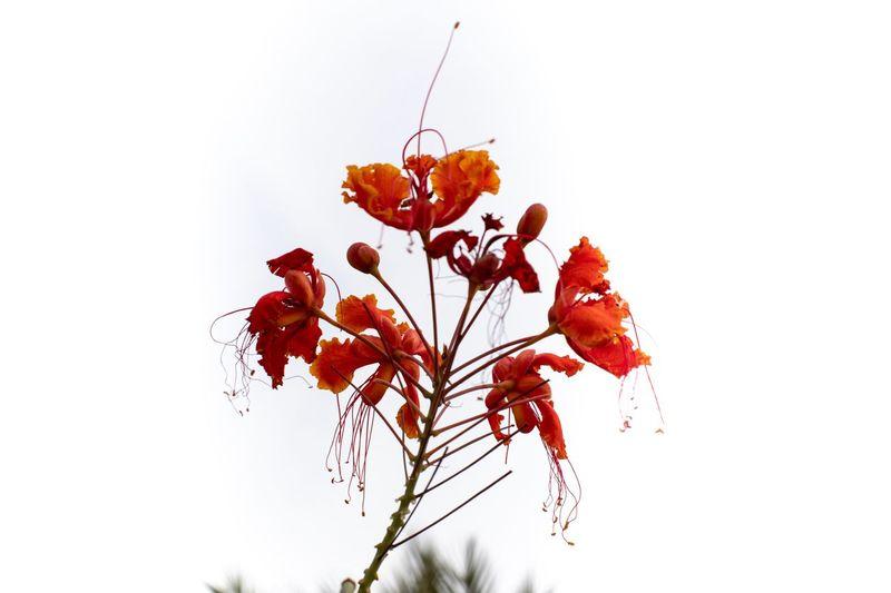 Exotic flower,