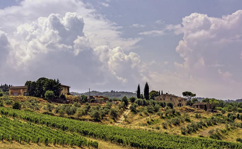 vineyardvineyard