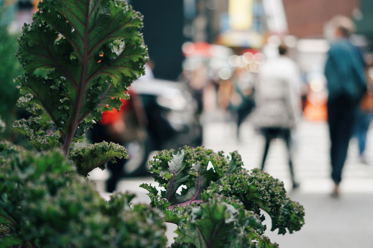 kale growing at Times Square Times Square NYC TimesSquare NYC NYC Street Photography NYC Street New York City Manhattan Plant Botany Kale Vegetable Leaf Vegetable EyeEm Selects Flower Defocused Business Finance And Industry Close-up
