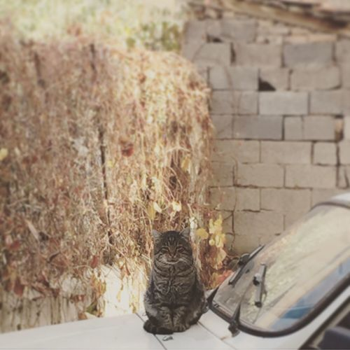 Cat Lovers Nature Cars