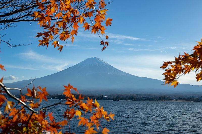 Mount FuJi Beauty In Nature Autumn Tree Plant Mountain Change Scenics - Nature Nature Tranquility Sky No People Day Plant Part Non-urban Scene Branch Growth Landscape Tranquil Scene Orange Color Leaf