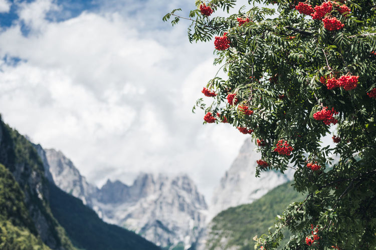 Dolomites, Italy Backgrounds Beauty In Nature Close-up Day Freshness Fruit Growth Mountain Mountain Range Nature No People Outdoors Red Sky Snow Tree