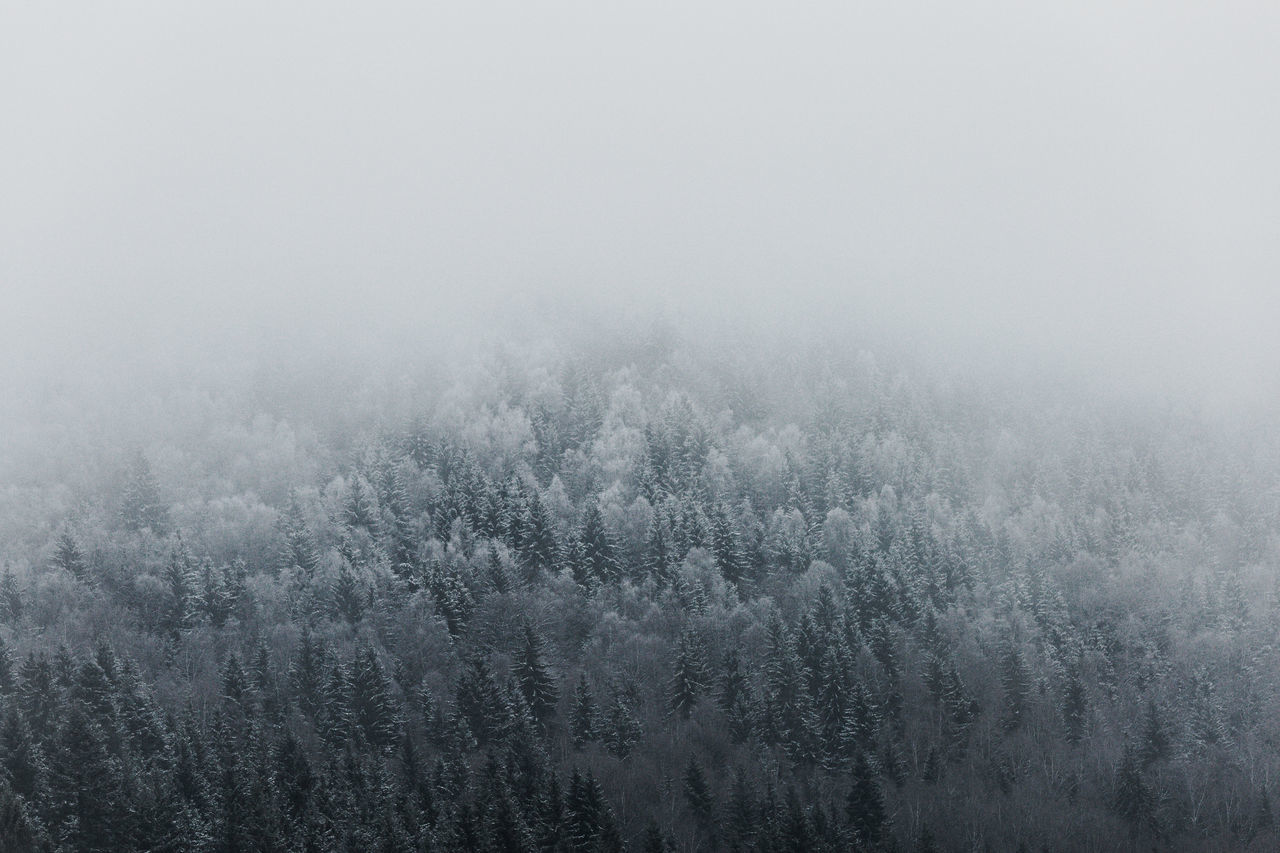 Frozen trees against sky during foggy weather