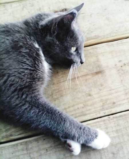 Kitty Sock Paws