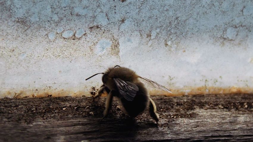 Bee First Eyeem Photo