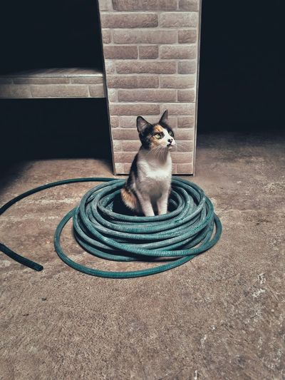 cat Snapseed