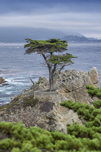 Beauty In Nature California Day Holiday Landscape Nature No People Outdoors Road Trip Scenics Sea Sky Tranquil Scene Tranquility Tree USA Vacation Vacations Water