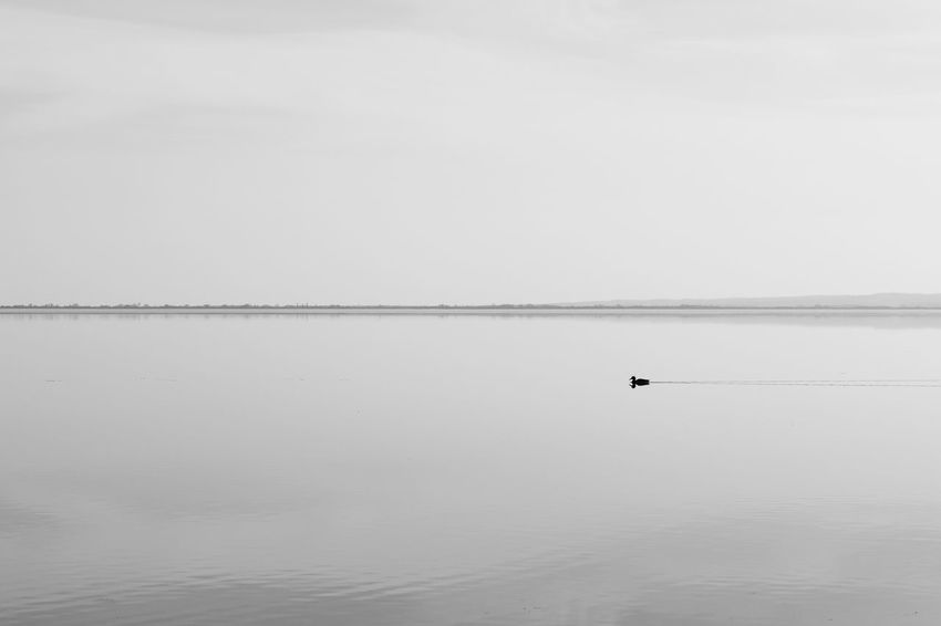Loneliness Black And White Calmness Duck Lake Loneliness Nature Tranquil Scene Tranquility Water