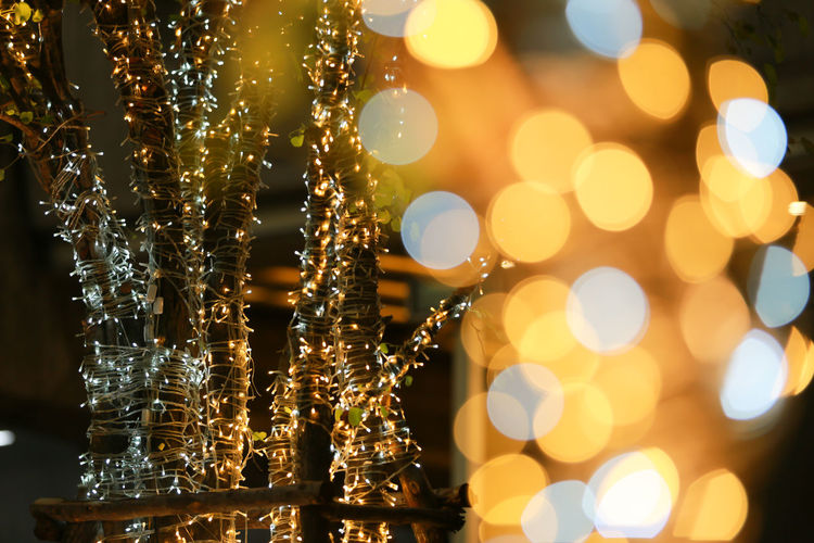 Close-up of illuminated tree and defocused light at night