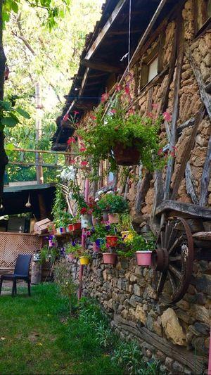 Cumalıkızıksokakları Cumalıkızık Flowers Bursa Bursa / Turkey Weekend First Eyeem Photo I Phone 6s IPhone 6s ıphone