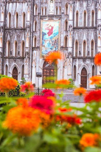 Blooming flowers in front of St Joseph's Cathedral in Hanoi Architecture Built Structure Building Exterior Flower Building Flowering Plant Religion Plant Place Of Worship Spirituality Arch Nature Focus On Background City Travel Destinations Day History Outdoors No People Vietnam Hanoi Selective Focus Church Cathedral Travel