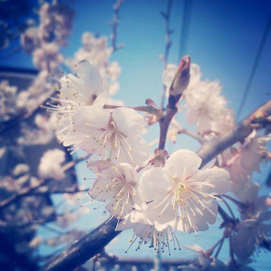 春 Relaxing