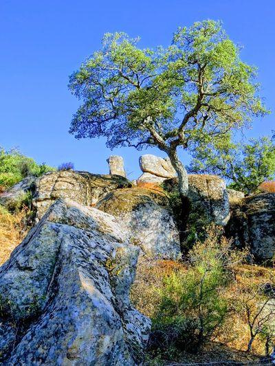 Tree Blue Rock