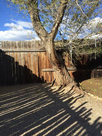 Tree and shadow Old Fence Fence Fences Tree Old Tree Desert Beauty Texture And Surfaces Pattern Desert Sky Northern New Mexico Clouds And Sky Taos New Mexico New Mexico, USA Shadow Shadows Shadowplay Shadow-art Shadow Play Stick Fence Stick Sticks Golden Hour Late Afternoon Weathered Composition