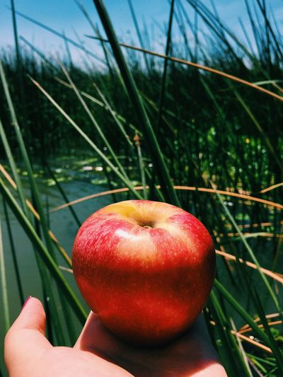 Apple Lunch Fishing Boat Drifiting Chilling Quiet Moments Home Is Where The Art Is