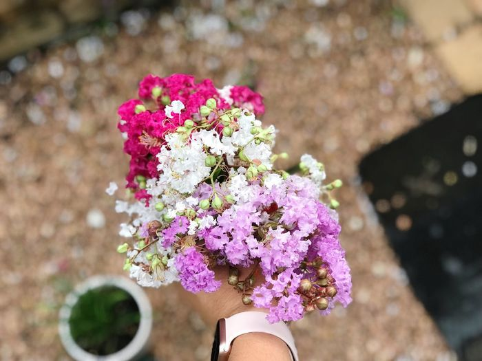 Cropped hand of woman holding flowers