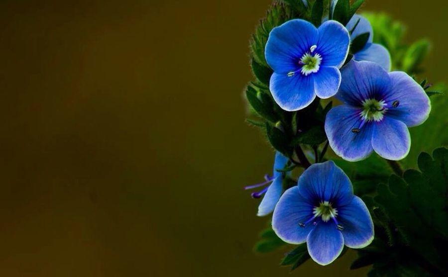 Macro Macro_flower Macro_collection Macro Photography Makro Nature Nature_collection EyeEm Nature Lover Beautiful Nature Natural Beauty