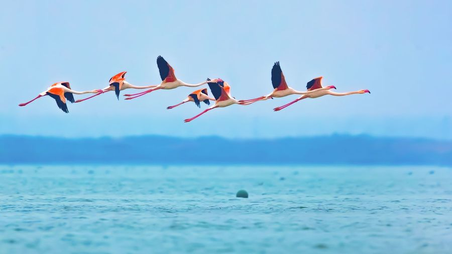 Birds flying over the sea