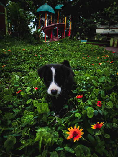 Portrait of dog with flowers in park