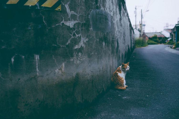 Cat sitting on roadside