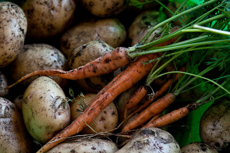 Close-up of carrots and raw potato