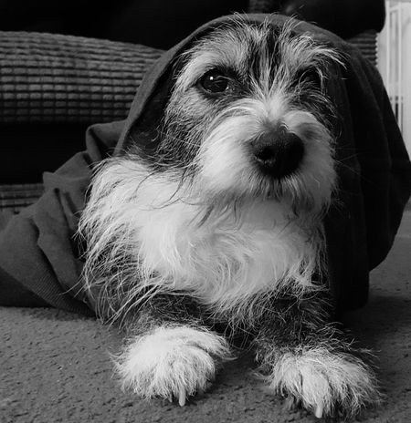 Trying out my new phone camera 🤗 Nopeople Taking Photos Black And White Macro Cute Pets Eye4photography  Streamzoofamily Dogs Phonecamera Black And White Photography PhonePhotography